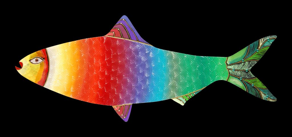shad fish : rainbow